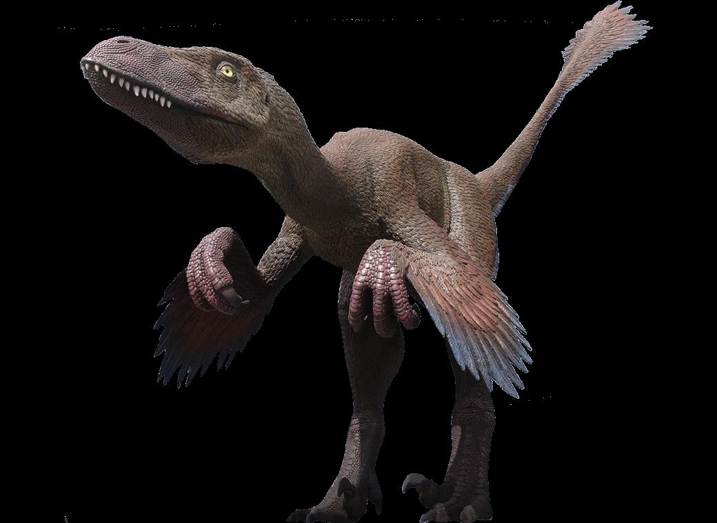 Velociraptor | Deinonychus Antirrhopus | Moab Giants